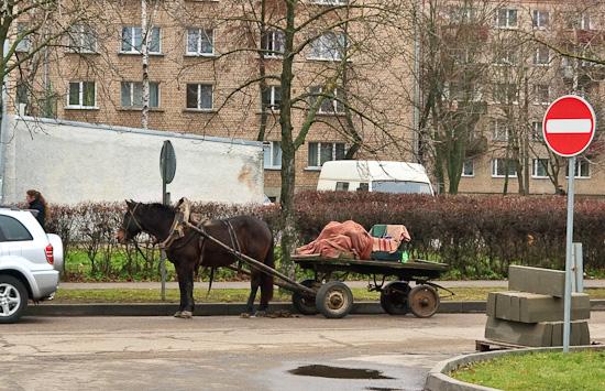 Zirgs liek kluci, gaidot saimnieci iznākam no veikala.