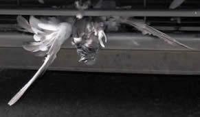 Maziņa šaizīte ar putniņu, kas kaut kur lidoja
